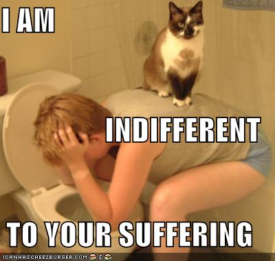 http://www.nerdgranny.com/wp-content/uploads/2008/04/funny-pictures-cat-on-vomiting-person.jpg